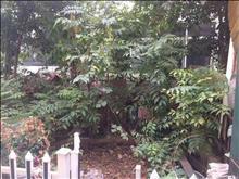 月盛花园 359万 5室2厅3卫 豪华装修 隆重出售,快快抢购